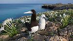 Dhalak Archipelago Eritrea