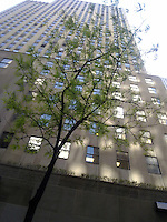 rockefeller center with tree