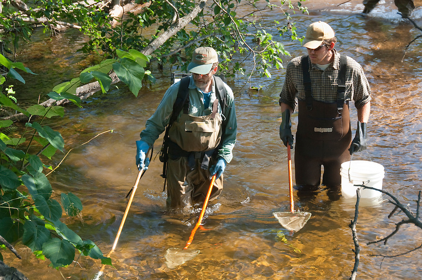 Coaster brook trout researchers electroshock the Salmon Trout River near Big Bay Michigan.