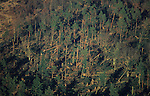 DEFORESTATION STORMS, France. Europe. Les Vosges, eastern France. Hurricane force winds uprooted millions of  trees across Europe. Dry weather followed  by heavy rain made the roots vulnerable.  Winds of 100-200kmh swept through the land  causing havoc. Hundreds of millions of trees were knocked down.