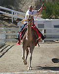 Jockey Rich Martin crosses the finish line during the 51st Annual Virginia City International Camel Races in Virginia City, Nev. on Sept. 10, 2010..Photo by Cathleen Allison