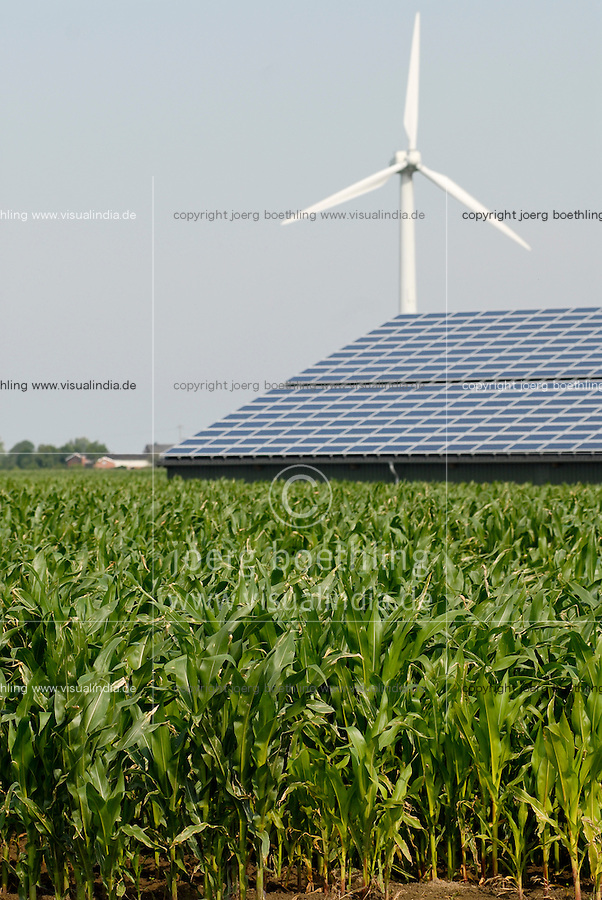 GERMANY maize field at agricultural farm with wind power and photovoltaic at Nordstrand / DEUTSCHLAND , Maisfeld und<br /> Bauernhof Kurt Maart mit Windenergie und Photovoltaik auf Nordseeinsel Nordstrand