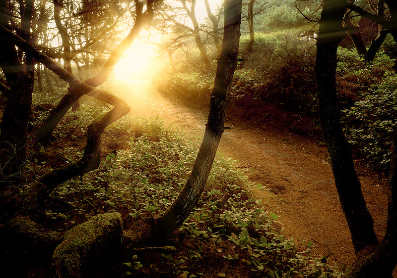 Shore Pine trees and path with sunburst at Seal Rock, Oregon