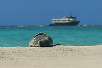 endemic and highly endangered Hawaiian Monk Seal, ilioholokauaua, Neomonachus schauinslandi, Pearl and Hermes reef, Papahanaumokuakea Marine National Monument, Northwestern Hawaiian Islands, Hawaii, USA, Pacific Ocean
