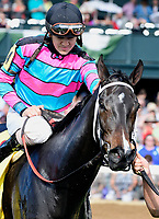 Lexington KY - October 7 Finley'sluckycharm wins the 37th running of the First Lady (Grade 1) for owner Carl Moore, trainer Bret Calhoun and jockey Brian Hernandez.  October 7, 2017