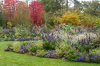 France, Domaine de Chaumont-sur-Loire, Festival International des Jardins, Prés du Goualoup, massif de plantes vivaces et annuelles à dominante violet en automne