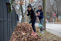 STAFF PHOTO JASON IVESTER --12/13/2014--<br /> Erika Allred (left) and Joelyn Daraphone (cq), both Rogers Heritage juniors, rake leaves at a residence near the school on Saturday, Dec. 13, 2014, as part of the school's Community Leaf Removal Day.