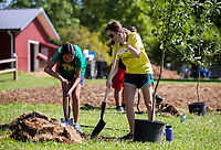 NWA Democrat-Gazette/JASON IVESTER<br /> Andrea Villfranca (cq) (left), 12, of Springdale and volunteer Janie Rippy of Rogers dig a hole Friday, June 16, 2017, to plant an apple tree at the Apple Seeds Teaching Farm in Fayetteville. Volunteers and students in the Food Ambassador Camp worked together to plant 32 trees in colaboration with the non-profit Fruit Tree Planting Foundation.
