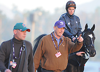 Trainer John Gosden walks his trainees to the turf course to exercise in preparation for the upcoming Breeders Cup at Santa Anita Park on October 31, 2012.