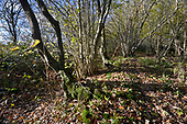 Ancient woodland boundary, Stoke Wood, Oxfordshire.