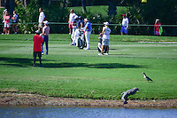 An aligator suns on the shoreline of number 1 as a duck strolls by and a threesome hits their approach shots during round 2 of the Honda Classic, PGA National, Palm Beach Gardens, West Palm Beach, Florida, USA. 2/24/2017.<br /> Picture: Golffile | Ken Murray<br /> <br /> <br /> All photo usage must carry mandatory copyright credit (&copy; Golffile | Ken Murray)