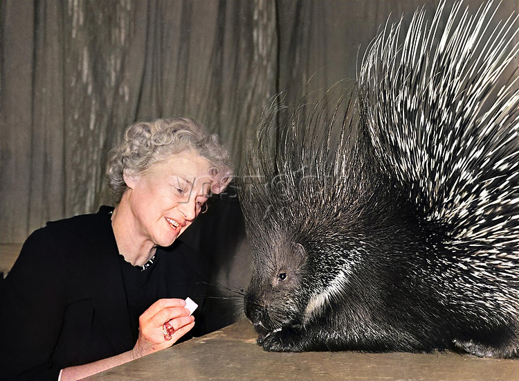 Training a porcupine Anna Durova daughter of renowned animal tamer Vladimir Durov and Durov s Nook performing animal theatre.
