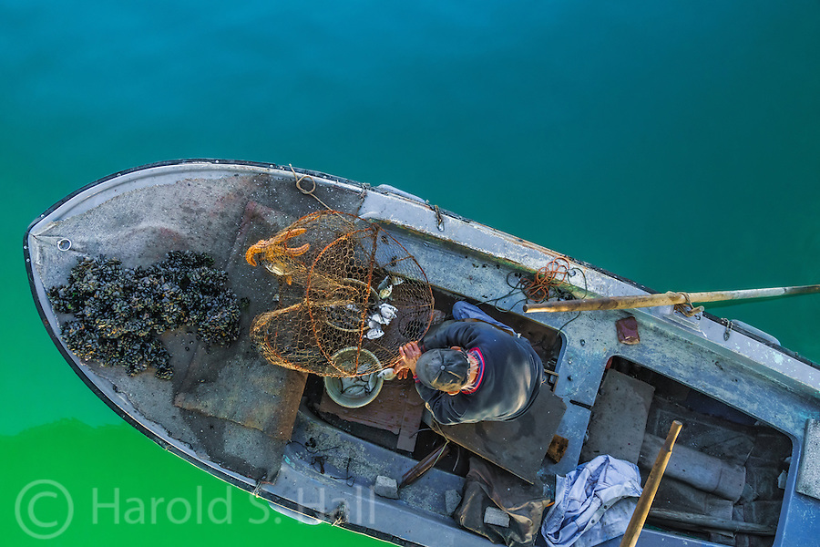 This is the typical fishing vessel in Zadar, Croatia.  No large trawlers, only single fisherman boats.  This man was working under the pedestrian bridge.  As hundreds of Croatians walked to work, this guy had already been on the job for hours.  Notice the clams, small perch and the starfish which he turned loose.