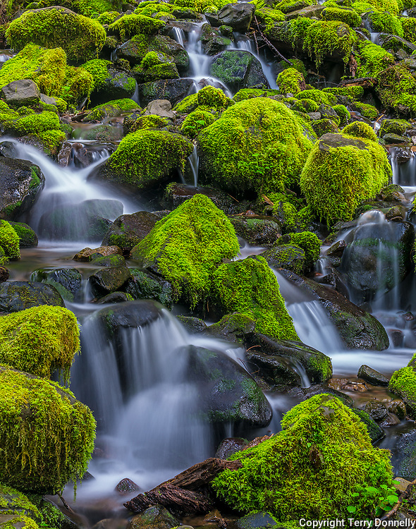 Olympic National Park, WA:<br /> Mossy stream detail, early spring, Sol Duc valley