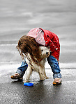 Stock photo of a Little girl hugging a Maltese dog on the street in a rainy weather