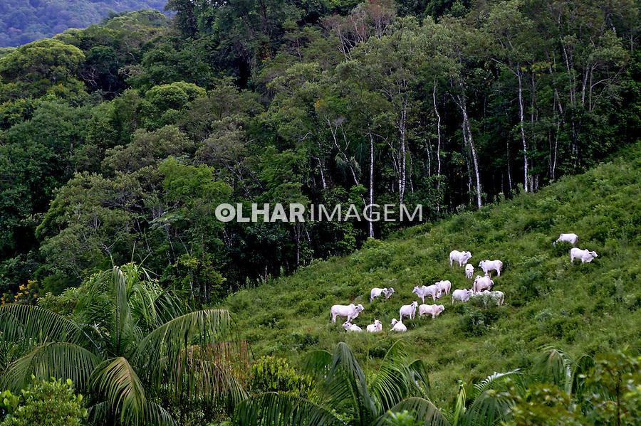 Criacao de gado em Mata Atlantica. Vale do Ribeira. Sao Paulo. 2012. Foto de Lineu kohatsu.