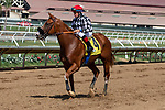 DEL MAR, CA  AUGUST 4:  #4 Tap the Wire, ridden by Drayden Van Dyke, return to the connections after winning the Graduation Stakes  in the stretch on August 4, 2018 at Del Mar Thoroughbred Club in Del Mar, CA. (Photo by Casey Phillips/Eclipse Sportswire/ Getty Images)