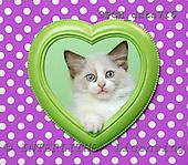 Xavier, ANIMALS, cats, photos, SPCHCATS716,#A# Katzen, gatos