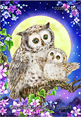 Kayomi, CUTE ANIMALS, LUSTIGE TIERE, ANIMALITOS DIVERTIDOS, paintings+++++,USKH298,#ac#, EVERYDAY ,#A#,realistic ,owl,owls