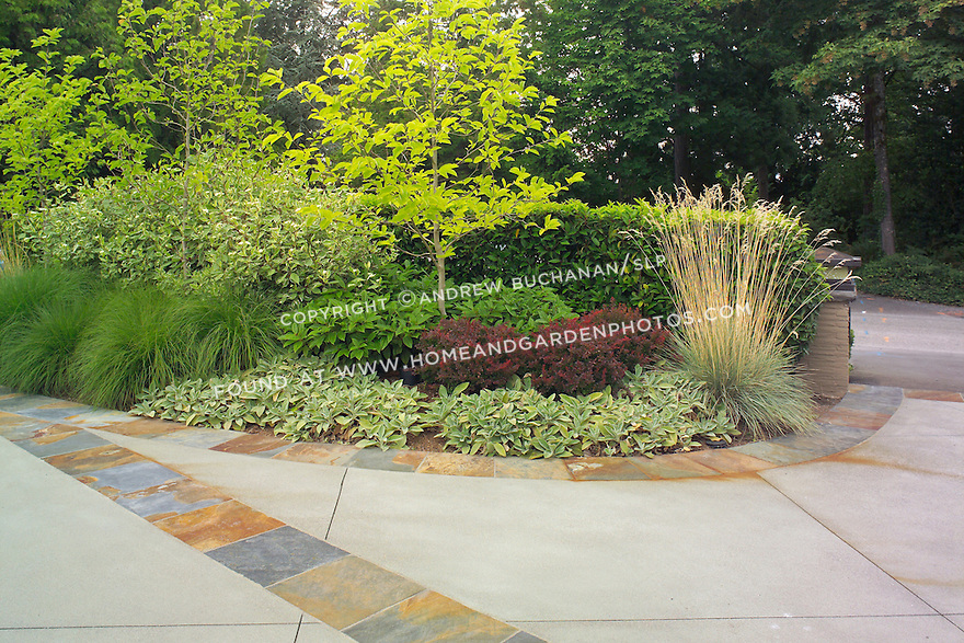 The edge and entrance of a professionally-landscaped driveway near Seattle boasts decorative slate tiles edging a poured concrete driveway, backed by a privacy hedge of mixed trees, shrubs, and ornamental grasses including dogwoods, viburnum, and red barberry.