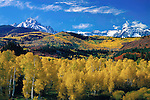 Autumn Aspen forest with Mount Sneffels (left) and Dallas Peak (right) in the San Juan Mountains, Telluride, Colorado, USA