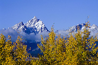 Grand Teton National Park with The Tetons and fall colors in  Wyoming, USA