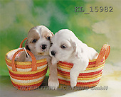 Interlitho, Alberto, ANIMALS, dogs, photos, 2 puppies in bags(KL15982,#A#)