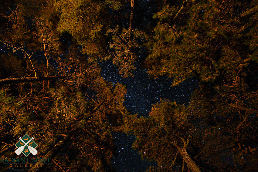 &quot;Fire-Lit Pines and Night Sky&quot;<br />