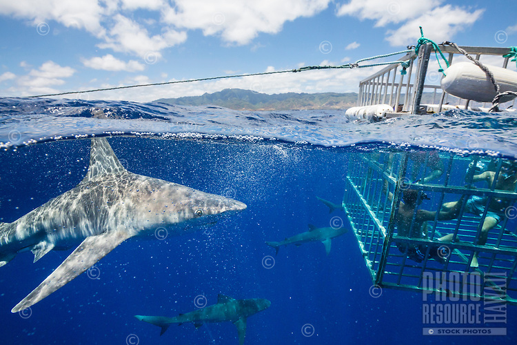 Tourists observing sharks from an underwater cage on a shark tour, Oahu
