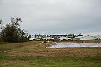 A CAFO and hog waste lagoon near Warsaw, North Carolina Wednesday, November 14, 2018. (Justin Cook)
