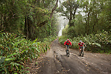 USA, Hawaii, The Big Island, journalist Daniel Duane and Chef Seamus Mullen mountain bike down mud lane from road 19 to road 240