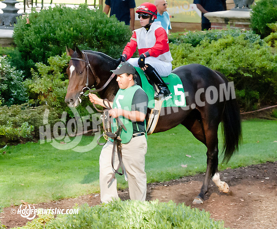 Admiral Perry before The With Anticipation Stakes Delaware Park on 9/26/13