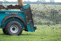 Spreading farmyard manure on grassland<br /> Picture Tim Scrivener 07850 303986<br /> &hellip;.covering agriculture in the UK&hellip;.