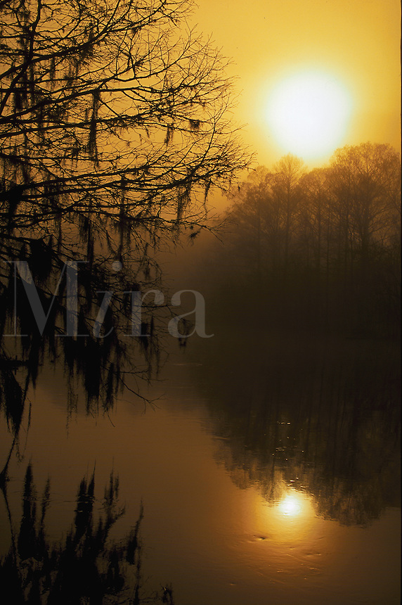 Sunrise over Withlacooochee River, Morning Mist, Near Inverness, Florida