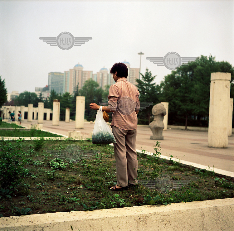 A woman tends to the plants in a public park.