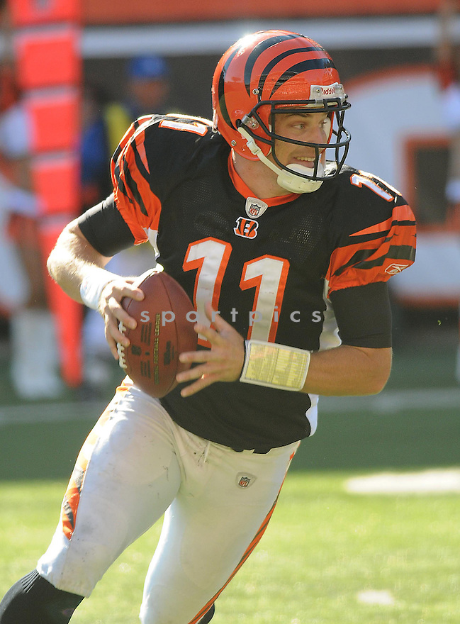 RYAN FITZPATRICK, of the Cincinnati Bengals in action against the Pittsburgh Steeler during the Bengals game in CIncinnati, OH  on October 19, 2008...The Steelers won the game 38-10.