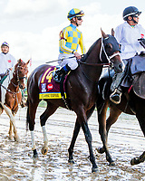 LOUISVILLE, KY - MAY 06: Classic Empire in post parade of the 143rd Kentucky Derby on Kentucky Derby Day at Churchill Downs on May 6, 2017 in Louisville, Kentucky. (Photo by Sue Kawczynski/Eclipse Sportswire/Getty Images)