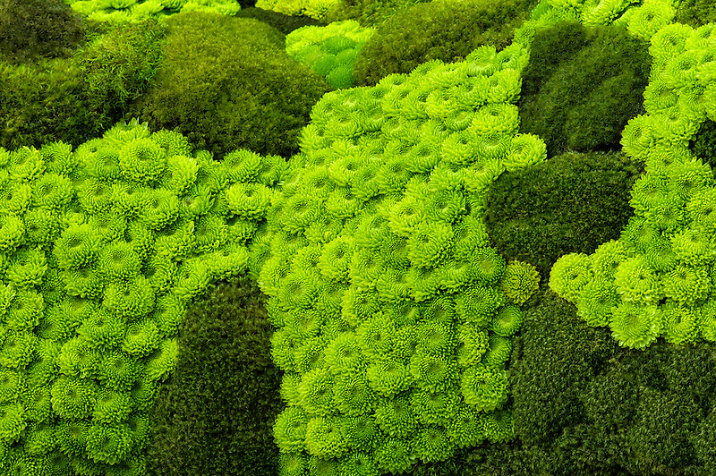 Mosses and rock garden succulents.
