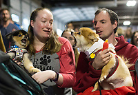 NWA Democrat-Gazette/CHARLIE KAIJO Nikita Mahurin and Daniel Jones (from left) of Rogers hold back their dogs Rally, a Pomeranian/husky mix and Chip, a Pomeranian, during a dog show, Saturday, April 21, 2018 at the Rogers Farmer's Market in Rogers.<br />