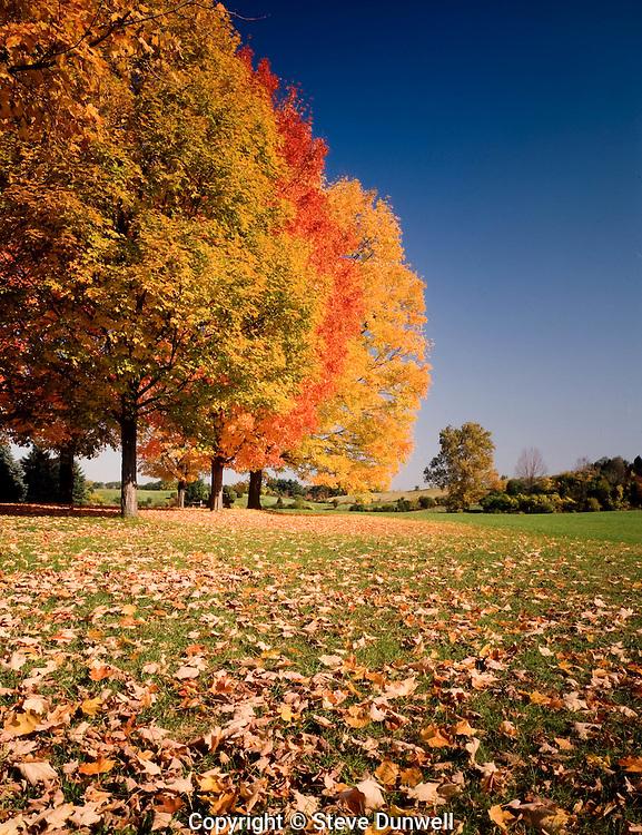 ROV-306 Chase Farm maples, Lincoln, RI autumn leaves