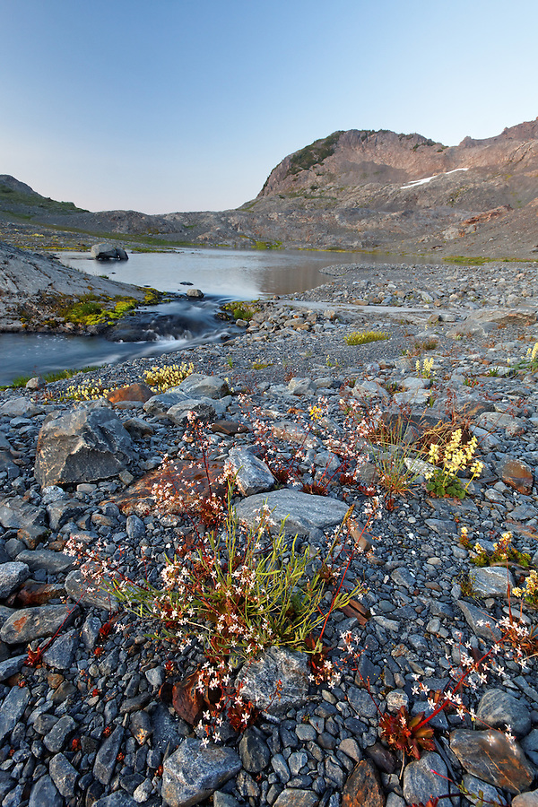Wildflowers and alpine lake in upper Ferry Basin, Bailey Range, Olympic National Park, Washington