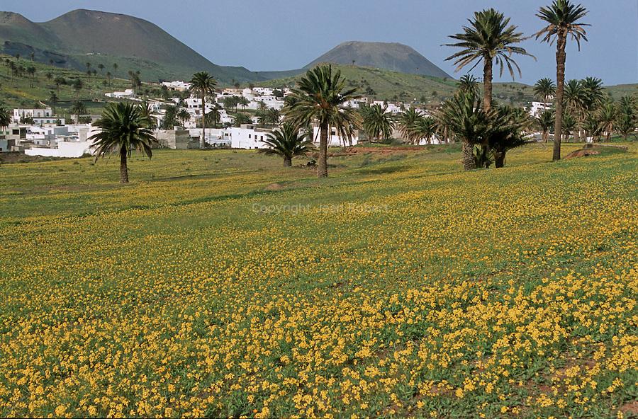Champs en fleurs vers le village de Haria. Ile de Lanzarote.