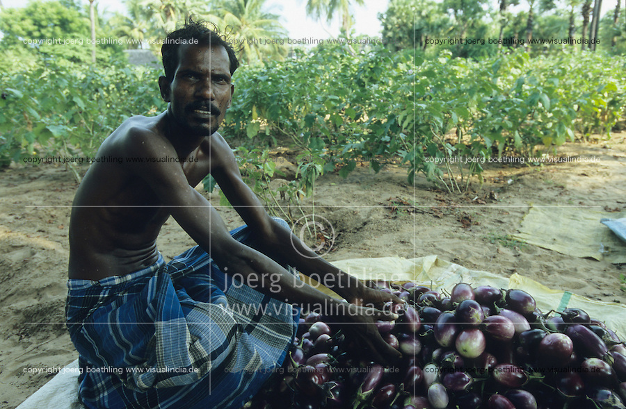 INDIEN Tamil Nadu, Bauern bei Auberginen Ernte - INDIA Tamil Nadu, farmer at brinjal harvest vegetables