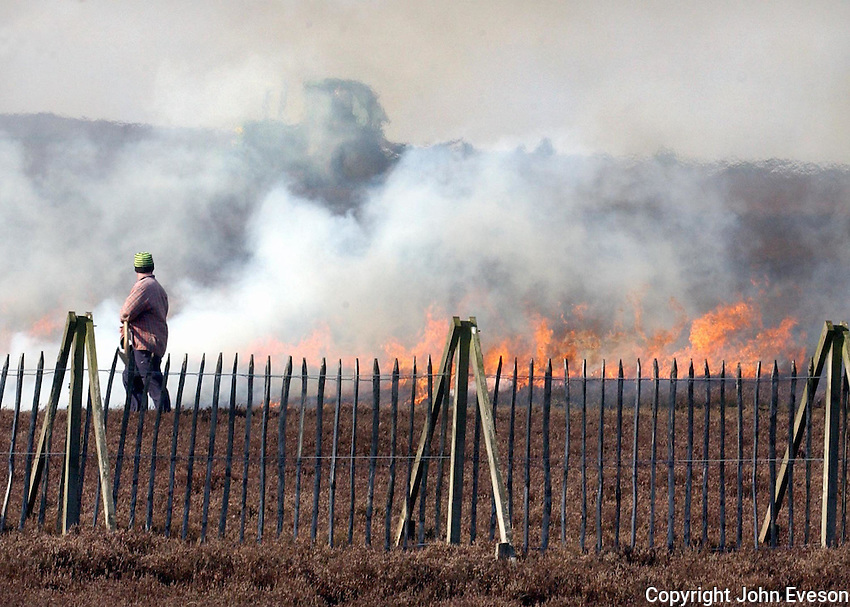 Burning heather at Greenlaw, Scotland. The  management technique is designed to achieve a range of heather ages that is required if moorland is to maintain the highest level of biodiversity.