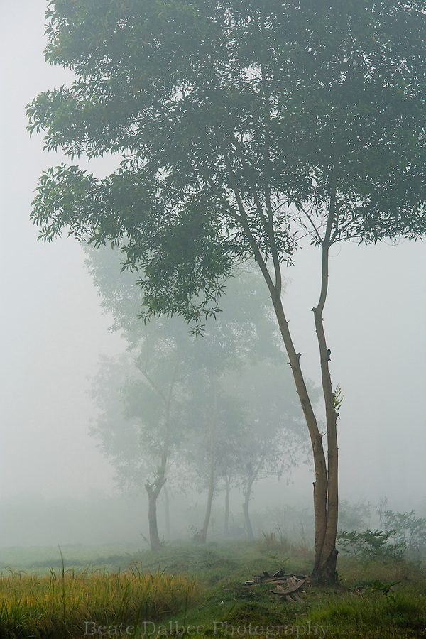 trees in the fog, Hpa An, Myanmar