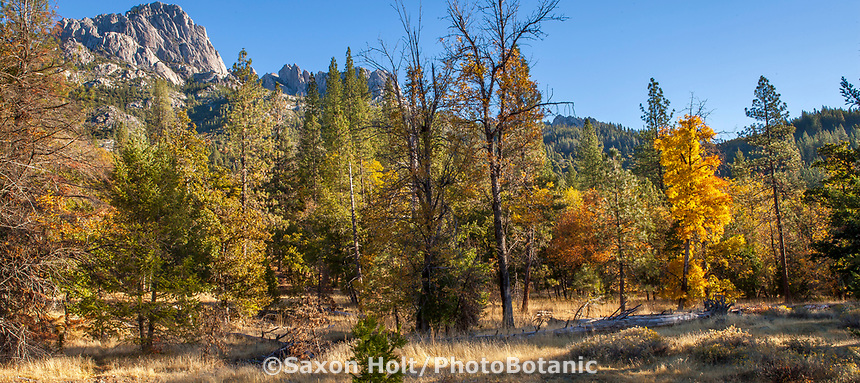 Autumn meadow in California; Castle Crags State Park, Shasta-Trinity National Forest
