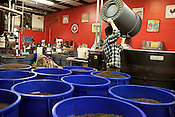 December 20, 2011. Durham, NC.. Brett Donahue dumps beans into the blending vat.. With the rising price of coffee worldwide and new fair trade regulations making it more difficult to get ethically traded coffee, how does local roaster Counter Culture maintain their mission and ethics?.