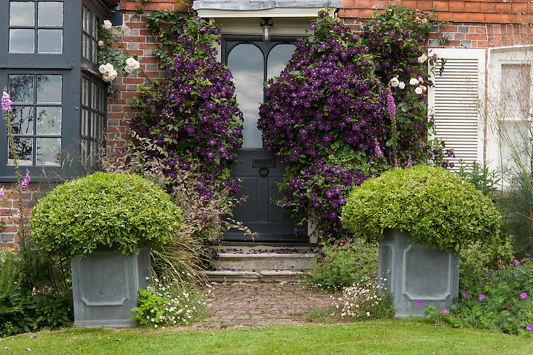 Clematis 'Étoile Violette' on either side of the door into the garden, Fairlight End, Pett, East Sussex, late June.
