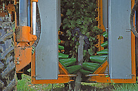 Machine harvest. Chateau des Vigiers, Monestier, Bergerac, France