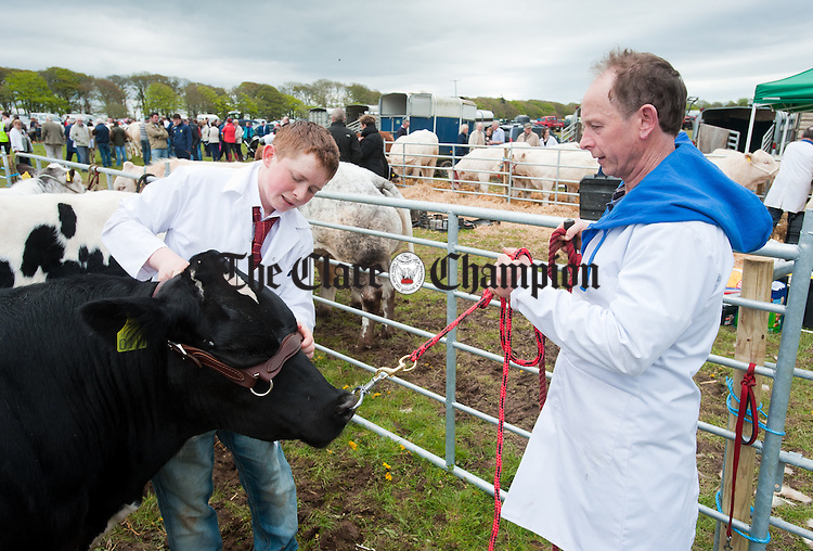 Aidan and Eamon O Donovan prepare their stock for judging at Newmarket On Fergus Show. Photograph by John Kelly.